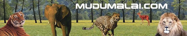 Mudumalai, Mudumalai Wild Life Sanctuary, Mudumalai Waterfalls