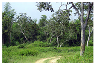 Bandipur Forest